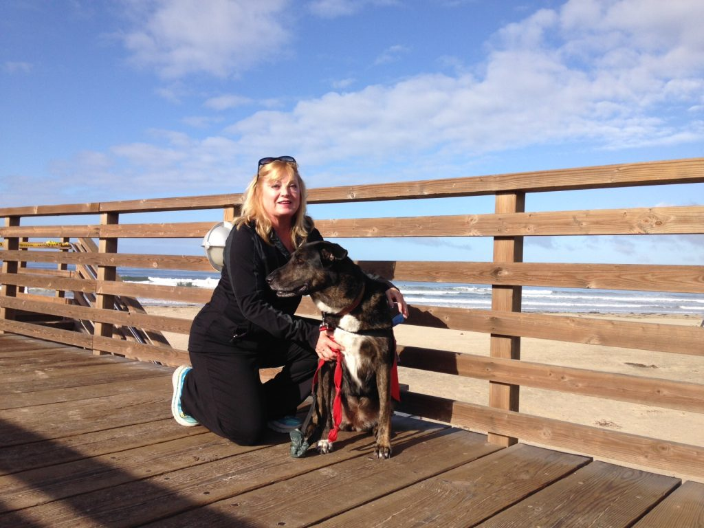 How to Greet a Dog on the Boardwalk