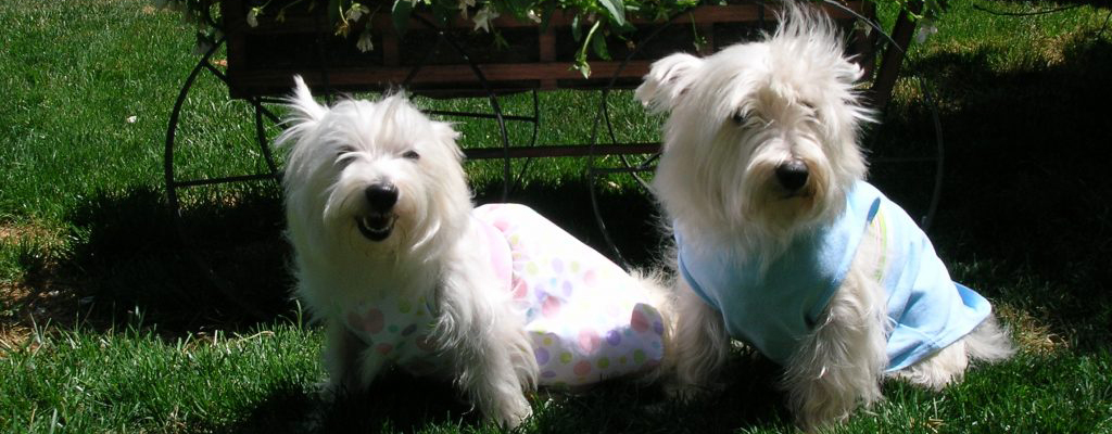 izzy-and-wyatt-auntie-gails-pet-sitting-sunland-ca