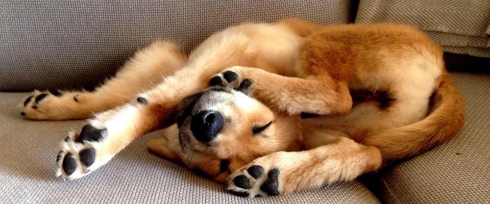silly-dog-auntie-gails-pet-sitting-sunland-ca